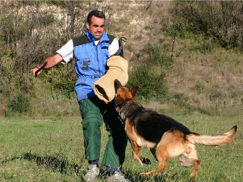 Eduquer Son Chiot - Astuces secrètes - Les bases de l'éducation canine - Comment y arriver ?